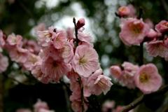 梅・産祭(うめうめまつり)